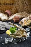 Fresh oyster on ice on a black stone table Stock Image