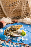 Fresh oyster on ice on a blue wooden table Stock Image
