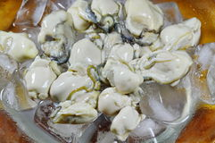Fresh oyster on ice. In glass dish Royalty Free Stock Photography