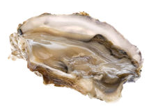 Fresh Oyster Isolated royalty free stock photography