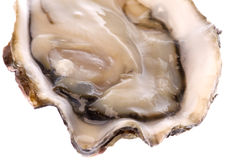 Fresh Oyster Isolated Royalty Free Stock Photos