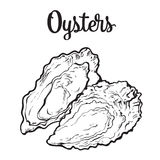 Fresh oyster isolated on a white background Stock Image