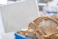 Fresh oyster mushrooms with blurry blank tag behind on the counter in a typical greengrocery bazaar in Turkey. Fresh oyster mushrooms with blurry blank tag Stock Photos