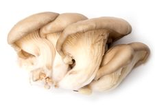 Fresh oyster mushrooms on a white background.  Royalty Free Stock Photography