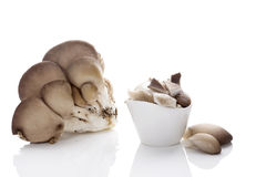Fresh oyster mushrooms. Stock Images