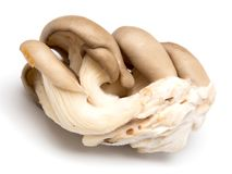 Fresh oyster mushrooms on a white background.  Stock Photo