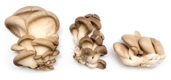 Fresh oyster mushrooms on a white background.  Stock Photography