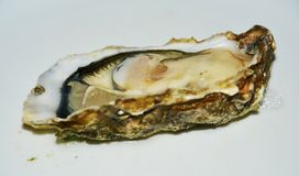 Fresh oyster on neutral background Royalty Free Stock Photography