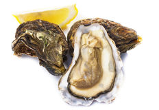 Fresh oyster. Fresh opened oyster on white background Royalty Free Stock Photography