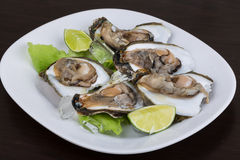 Fresh oyster Stock Photography