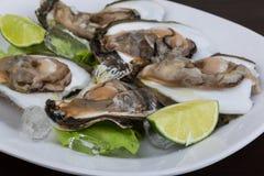 Fresh oyster Royalty Free Stock Photos