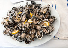 Fresh Oyster Platter Royalty Free Stock Images