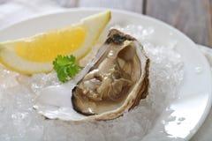 Fresh oyster platter Stock Image
