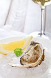 Fresh oyster platter served in ice. With white wine Stock Image