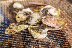 Fresh Oyster and scallop grill.  Stock Photography