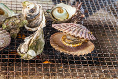 Fresh Oyster and scallop grill. Fresh Oyster and scallop grill Royalty Free Stock Image