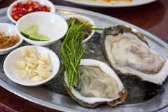 Fresh oyster. Served with garlic lemon and spicy Royalty Free Stock Image
