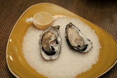 Fresh oyster shellfish in luxury restaurant. eating oyster with lemon and crushed ice. healthy delicacy with omega 3. Vitamin. Seafood and Mediterranean cuisine Royalty Free Stock Photography