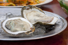 Fresh oyster. Two of fresh oyster on ice Royalty Free Stock Photography