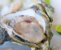 Fresh oyster, very shallow focus Stock Photography