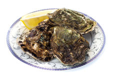 Fresh oyster. On white background Royalty Free Stock Photo