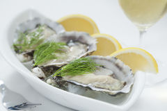 Fresh oysters. Fresh river oysters on ice with dill, lemon and wine Royalty Free Stock Photos