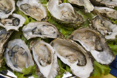 Fresh oysters. Ready open oysters in restaurant Royalty Free Stock Image