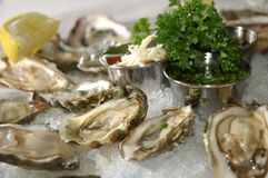 Fresh oysters Royalty Free Stock Image