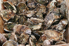Fresh Oysters. Raw Oysters at the market stock images