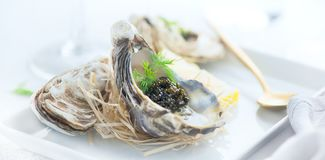 Fresh oysters with black caviar. Opened oysters with black sturgeon caviar. Gourmet food. Delicatessen stock image