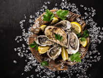Fresh oysters on a black stone Stock Images