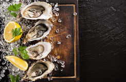 Fresh oysters on a black stone Royalty Free Stock Image