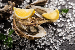 Fresh oysters on a black stone Stock Photography