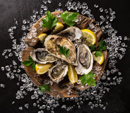 Fresh oysters on a black stone Royalty Free Stock Photography