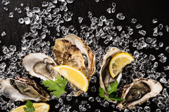 Fresh oysters on a black stone Royalty Free Stock Photo