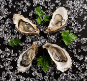 Fresh oysters on a black stone Stock Photos