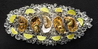 Fresh oysters on a black stone table stock photography