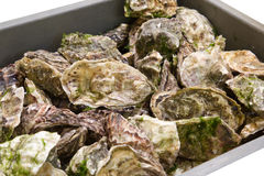 Fresh oysters in a box Stock Photo