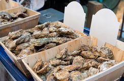 Fresh oysters in a box at the fish market Royalty Free Stock Image