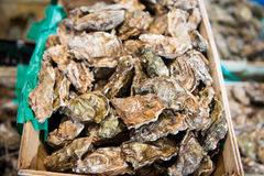 Fresh oysters in a box at the fish market Royalty Free Stock Images