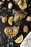 Fresh oysters and clams on a black stone plate Royalty Free Stock Photo