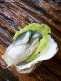 Fresh oysters Royalty Free Stock Photos