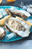 Fresh oysters close-up on blue plate, served table with oysters, lemon and champagne in restaurant. Gourmet food Royalty Free Stock Photos