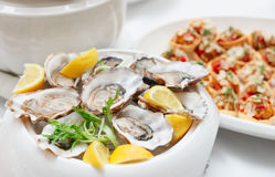 Fresh oysters close-up Stock Image