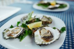Fresh oysters on a white plate with green salad and lemon on a blue tablecloth royalty free stock images