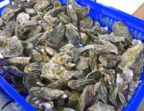 The fresh oysters closeup Stock Photo