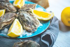Fresh Oysters closeup on blue plate, served table with oysters, lemon and ice. Healthy sea food. Oyster dinner in restaurant. Gourmet food royalty free stock photos