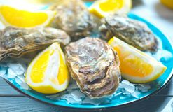 Fresh Oysters closeup on blue plate, served table with oysters, lemon and ice. Healthy sea food. Oyster dinner in restaurant. Gourmet food royalty free stock images