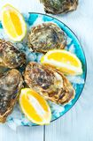 Fresh Oysters closeup on blue plate, served table with oysters, lemon and ice. Healthy sea food. Oyster dinner in restaurant royalty free stock image