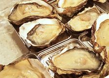 Fresh oysters closeup Royalty Free Stock Photography